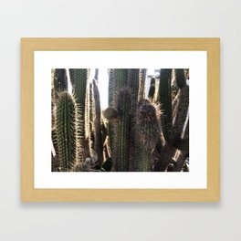Kaktus / color Framed Art Print