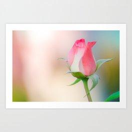 Pink Dream, Rose Photography, Rose Art, Nature Photography, Flower Print, Floral Print, Nature Print Art Print