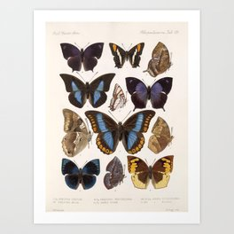 Vintage Scientific Insect Butterfly Moth Biological Hand Drawn Species Art Illustration Art Print