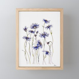 Blue Cornflowers, Illustration Framed Mini Art Print