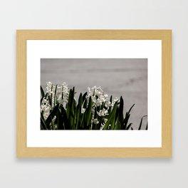 Hyacinth background Framed Art Print