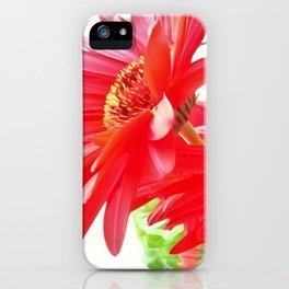 Red Gerbera Daisies WC iPhone Case