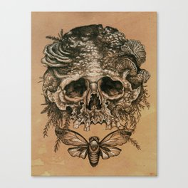 Skull with Cicada Canvas Print