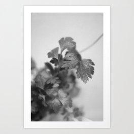 Leaves of Parsley Art Print
