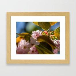 Blossom. Framed Art Print