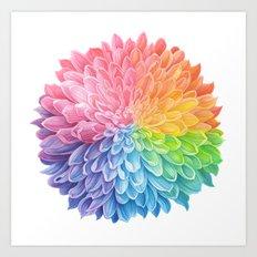 Rainbow Chrysanthemum Art Print
