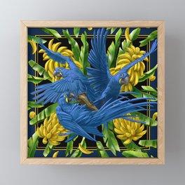 Hyacinth Macaws and bananas Stravaganza (black background). Framed Mini Art Print