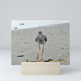 Greater Yellowlegs (Sandpiper) Looking at Camera Mini Art Print