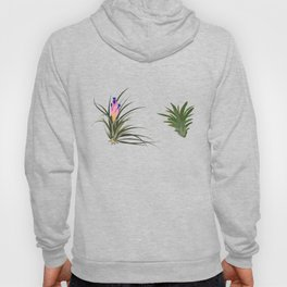 Air Plants Charcoal Background Hoody