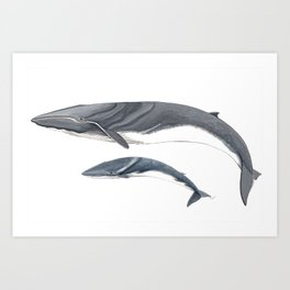Fin whale Art Print