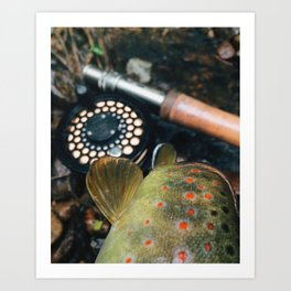 How Now Brown Trout Art Print