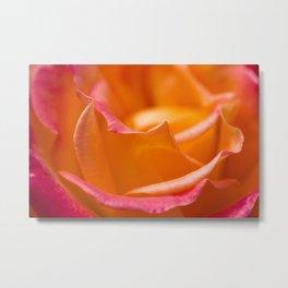Orange Rose Macro Photograph Metal Print