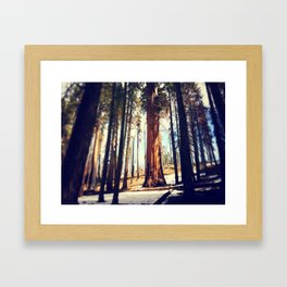 Giant Sequoia Framed Art Print