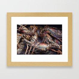 Lobsters, Anegada, BVI  Framed Art Print