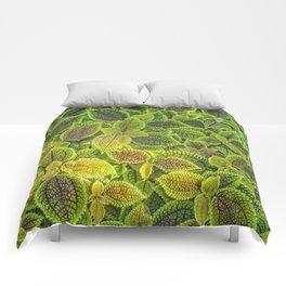 Friendship plant Comforters