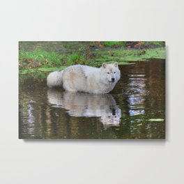 Wolf Reflection Metal Print