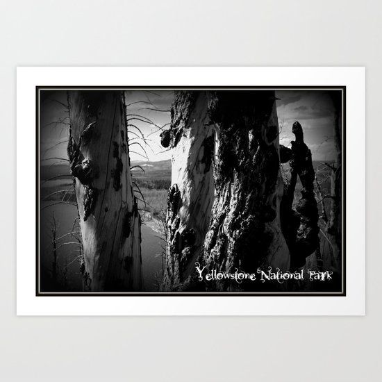 Rebirth in Yellowstone Art Print