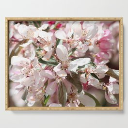 Light Pink Crab Apple Tree Close Up Serving Tray