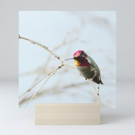 Hummingbird Mini Art Print