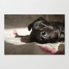 Lazy Afternoons Canvas Print