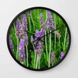 Common lavender flowers Wall Clock