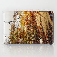 birch iPad Cases featuring Birch by TakaTuka Photo