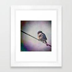 A New York City Sparrow Framed Art Print