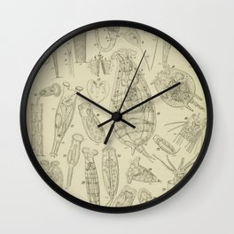 Microscopic Biology Wall Clock