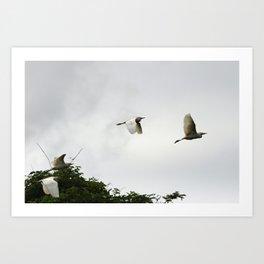 Flight of the egrets Art Print