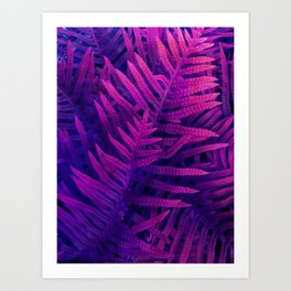 Ferns#2 Art Print