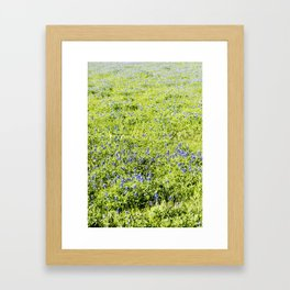 Texas Bluebonnet Field Framed Art Print