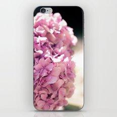 The beautiful hydrangea iPhone & iPod Skin