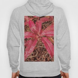 Autumn Colored Leaves Hoody