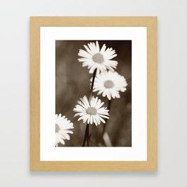 Gänseblümchen Framed Art Print