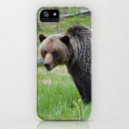 Grizzly encounter in Jasper National Park iPhone Case