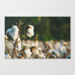 Cotton Field 10 Canvas Print