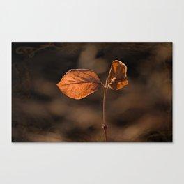 Sunlit Golden Leaf Canvas Print