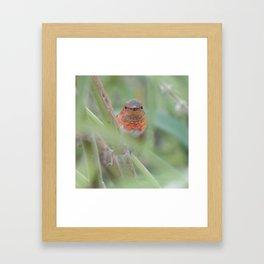 An Allen's Hummingbird Amid Mexican Sage Framed Art Print