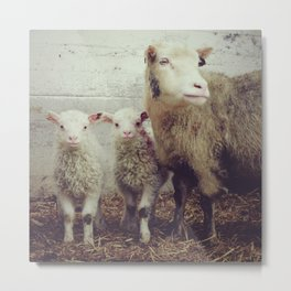 Sheep #1 Metal Print