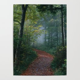 The Forest Path (Color) Poster
