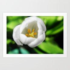 Tulip Stamen Art Print