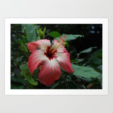Droplets on red Art Print