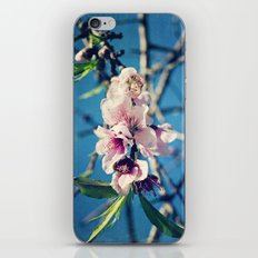 Nectarine Blossoms iPhone & iPod Skin