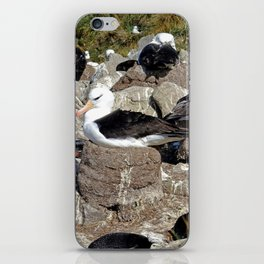 Albatross Colony iPhone Skin