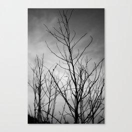 Shadow Twigs Canvas Print