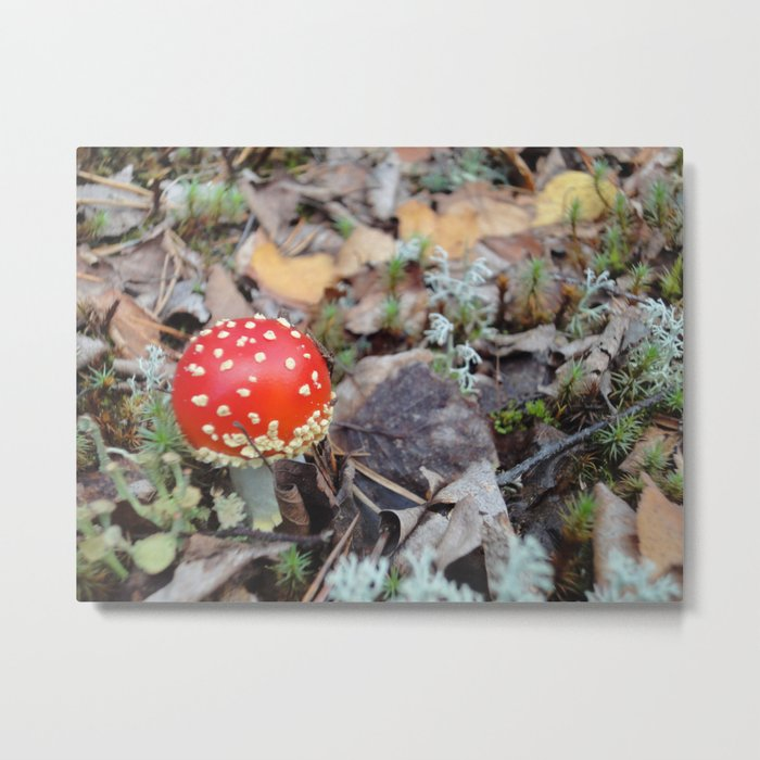 The Lonely Red Metal Print