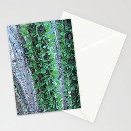 Ocotillo Fence Stationery Cards