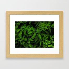 Japanese Ferns Framed Art Print