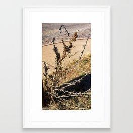 Roadside Weed Framed Art Print