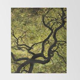Japanese Maple Tree Throw Blanket